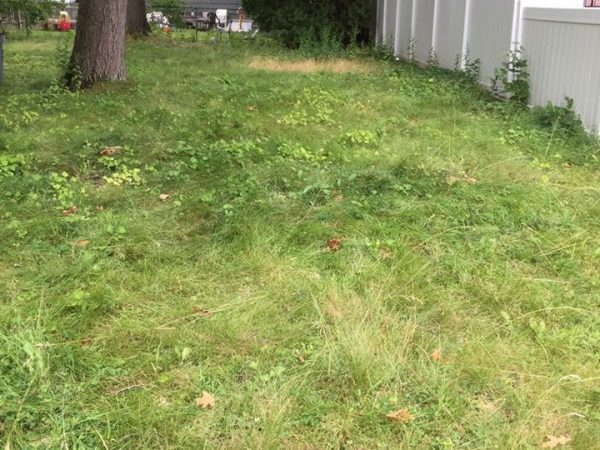 Manchester NH Fall Cleanup, we first start with some basic grass cutting and then a bunch of leaf removal.