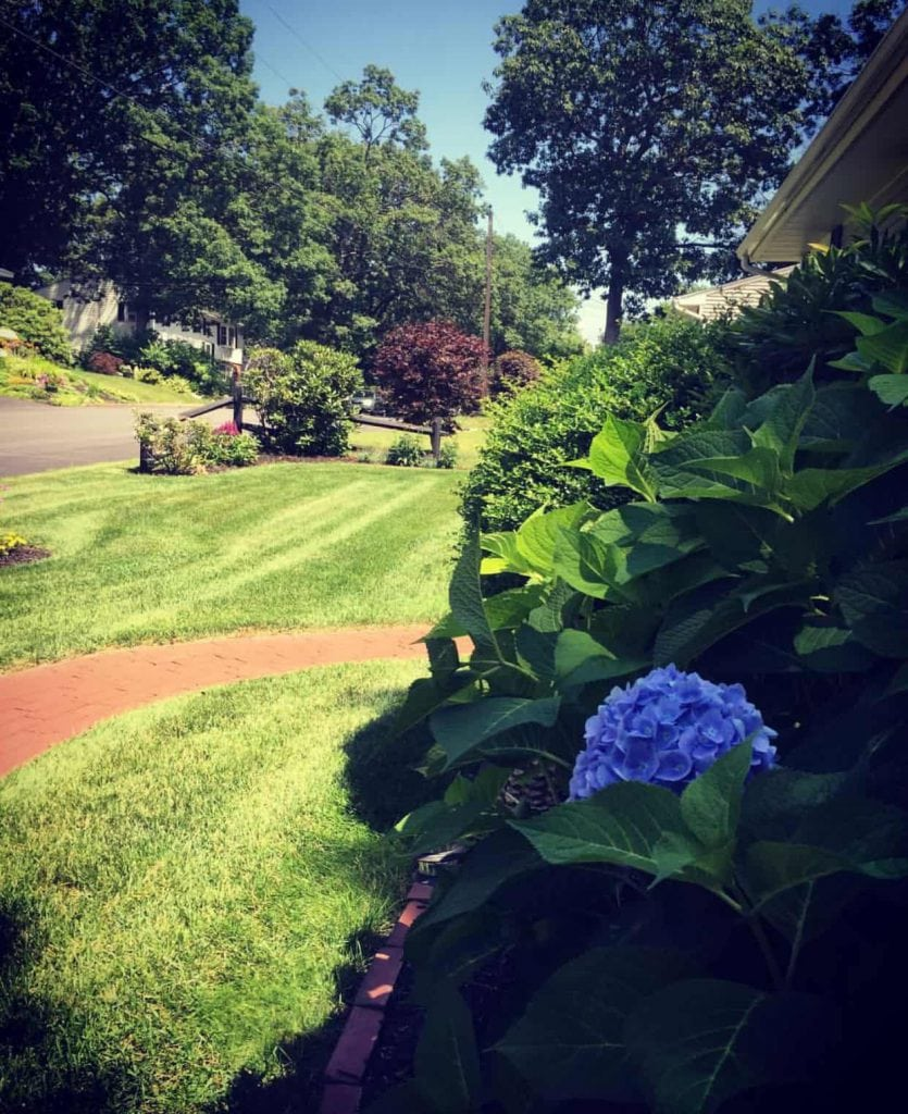 Spring Clean Up Contractors in Manchester NH
